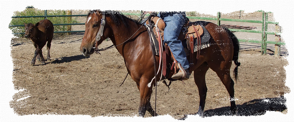 Horses_Header, equine, horse, food, feed, supplements