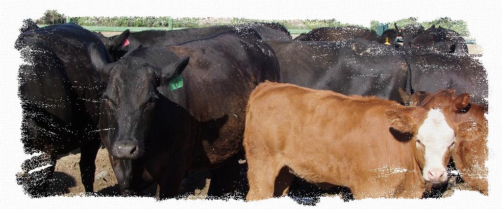 Livestock_Header
