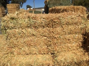 forage_hay