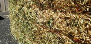 Performance Hay Quality Assurance