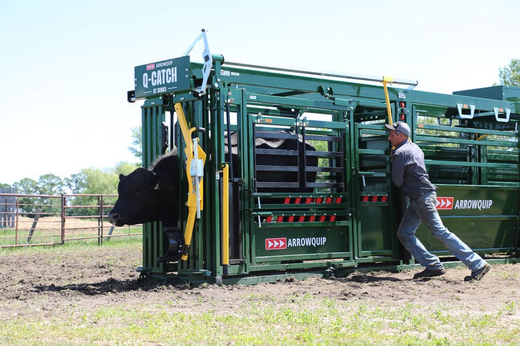 Arrowquip Cattle Handling Chute